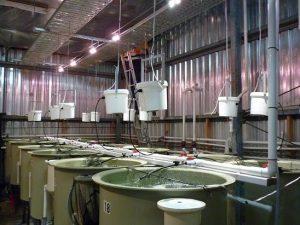 CSIRO Pic Batching Control System